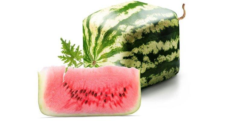 melancia quadrada japao