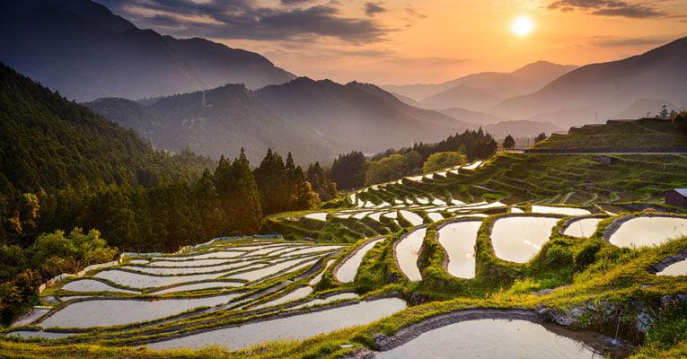 campos de arroz japao
