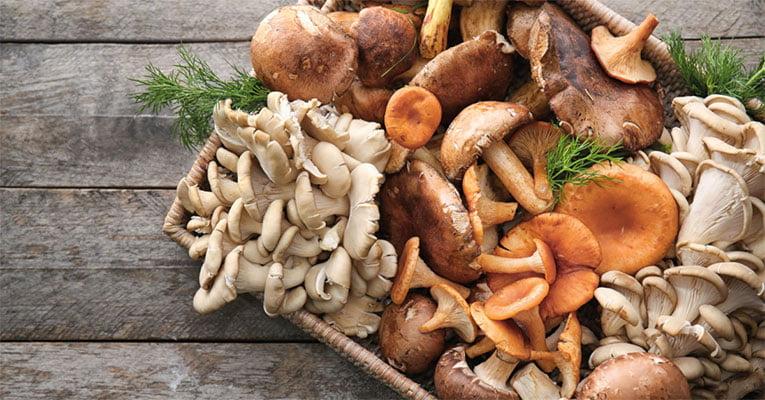 cogumelos japoneses
