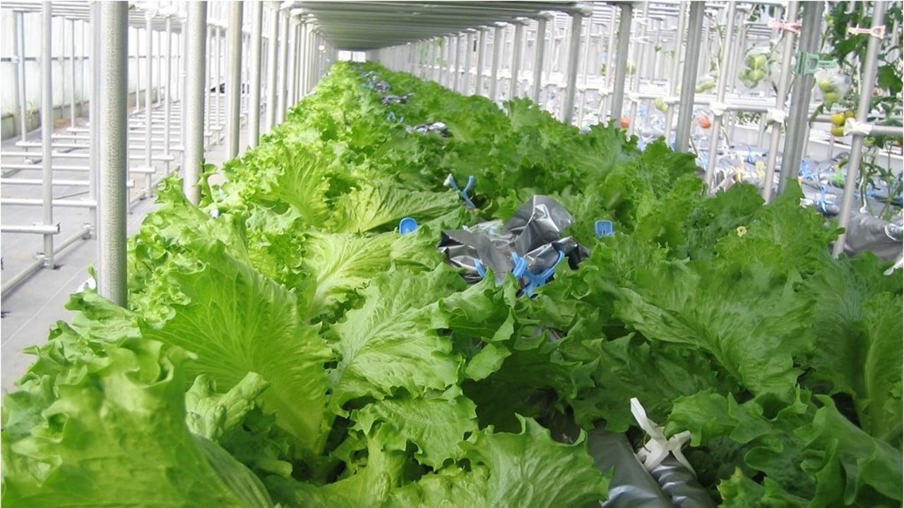 Tecnologia japonesa agrícola