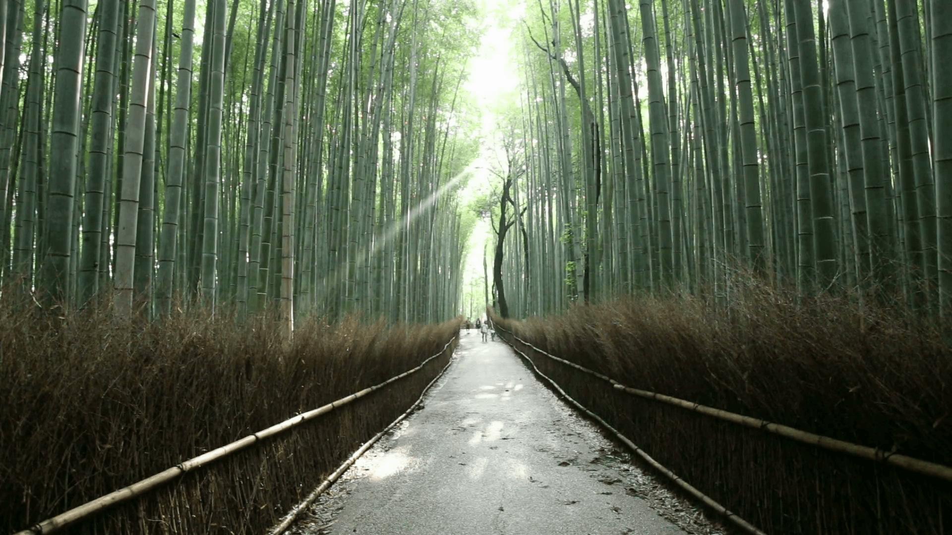 caminho de bambus de Arashiyama