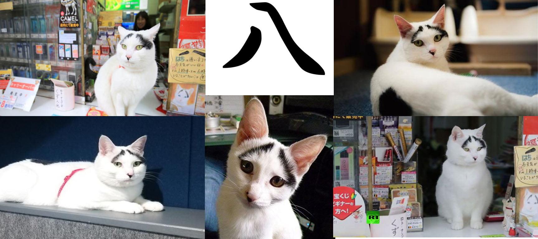 Gata Hachi Japão