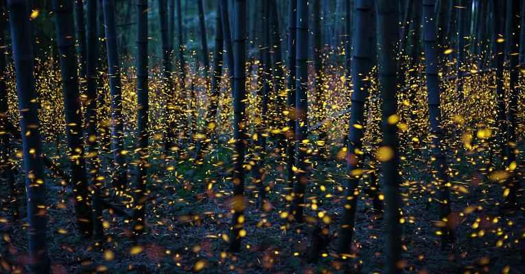 Ainda dá tempo de ver a temporada de vagalumes no Japão