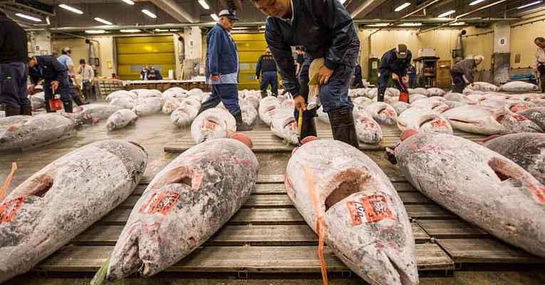 leilão de atum no mercado tsukiji