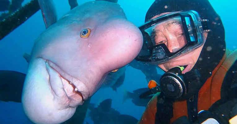 Mergulhador Hiroyuki Arakawa e o peixe Yoriko