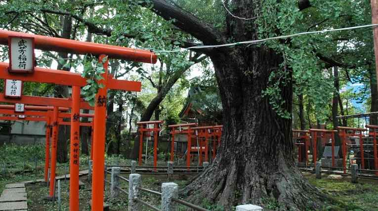 Caminho de torii