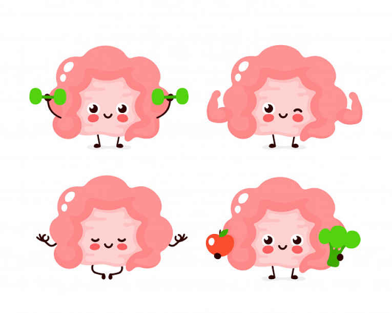 Ilustração de intestinos saudáveis