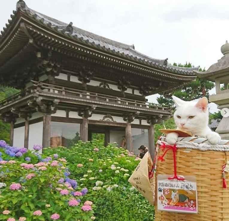 Koyuki em frente ao templo