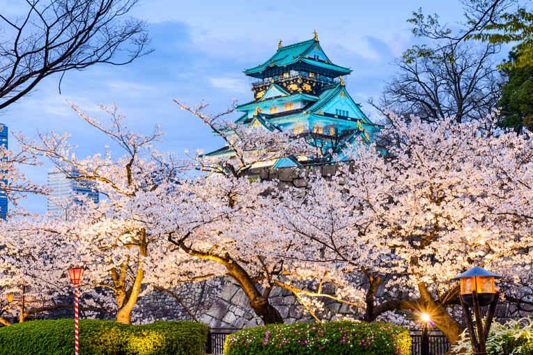 Parque de sakura do castelo de Osaka