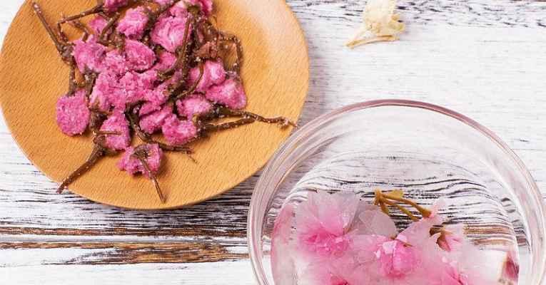 Flor de cerejeira seca no sal