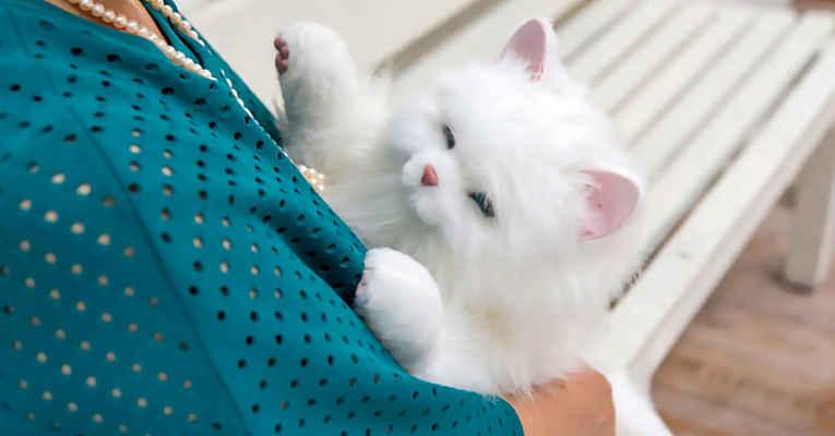 Gato robô Neko-chan