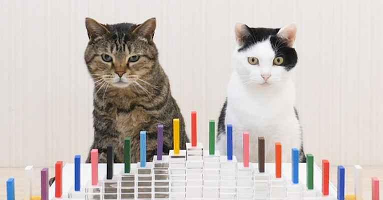 Vídeo japonês de gatinhos e domino